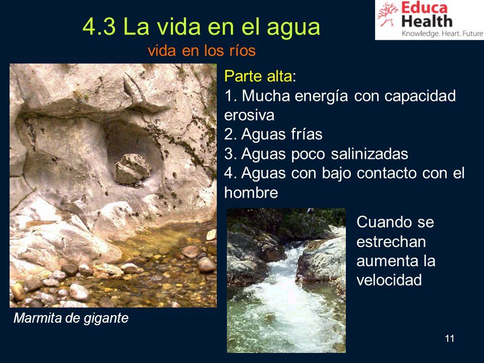 11 4.3 La vida en el agua vida en los ríos Parte alta: 1. Mucha energía con capacidad erosiva 2. Aguas frías 3. Aguas poco salinizadas 4. Aguas con ba