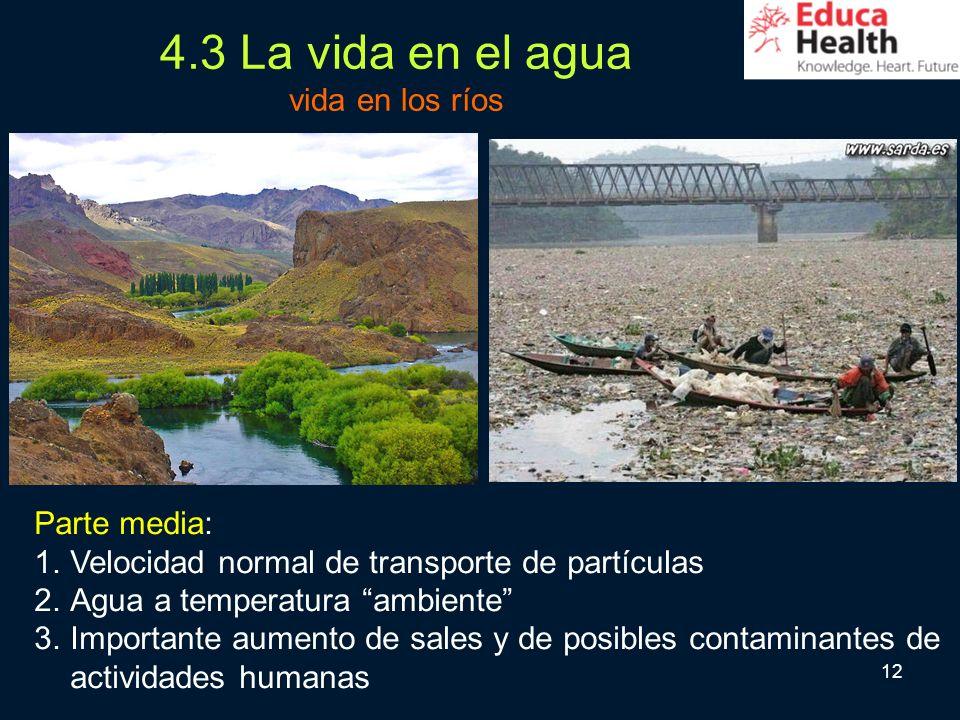 12 4.3 La vida en el agua vida en los ríos Parte media: 1.Velocidad normal de transporte de partículas 2.Agua a temperatura ambiente 3.Importante aume