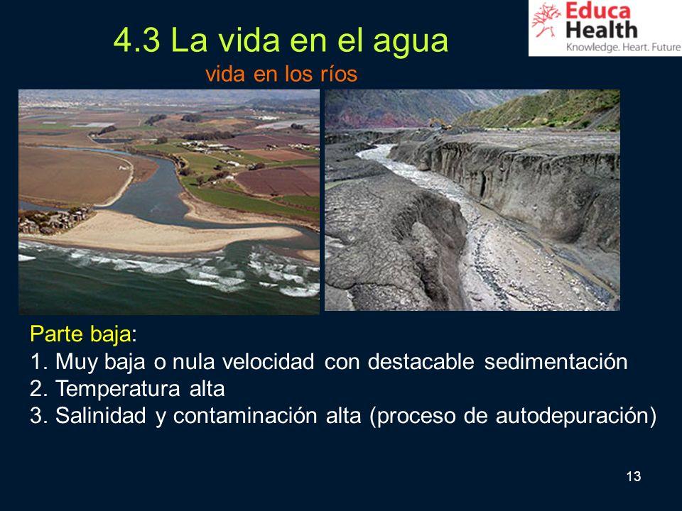 13 4.3 La vida en el agua vida en los ríos Parte baja: 1.Muy baja o nula velocidad con destacable sedimentación 2.Temperatura alta 3.Salinidad y conta