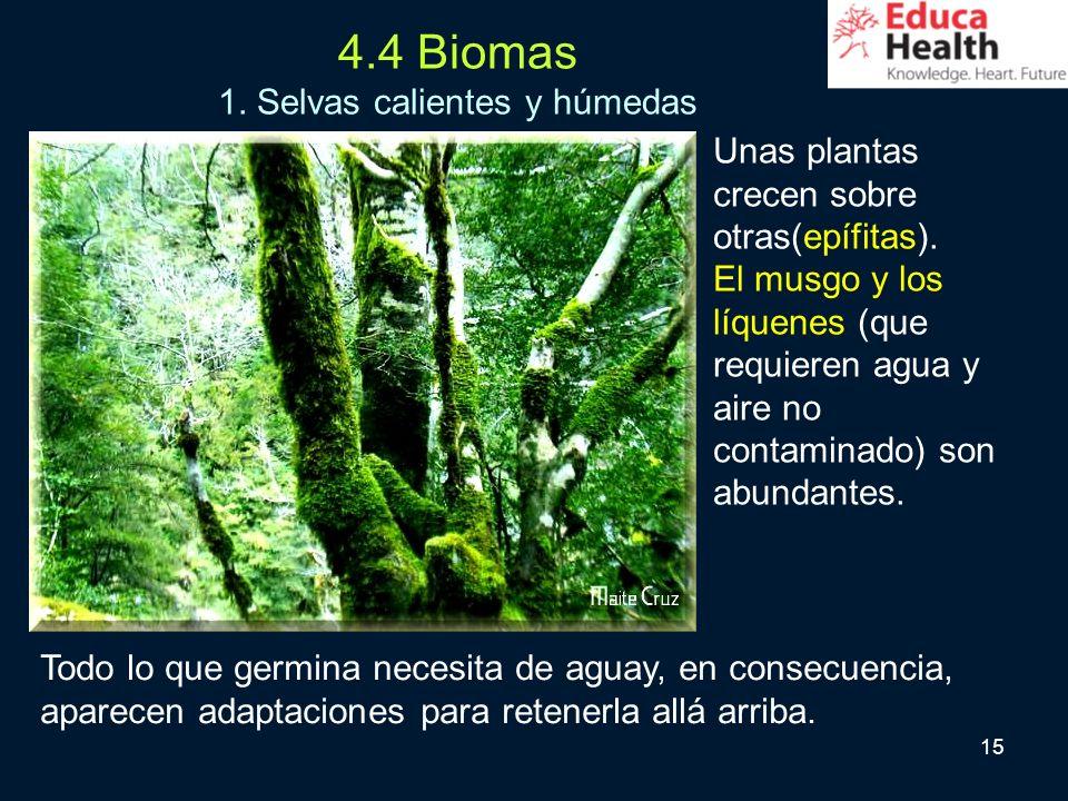 15 4.4 Biomas 1. Selvas calientes y húmedas Unas plantas crecen sobre otras(epífitas). El musgo y los líquenes (que requieren agua y aire no contamina
