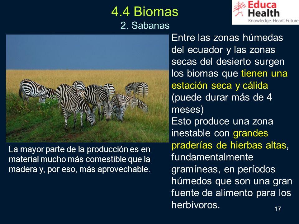 17 Entre las zonas húmedas del ecuador y las zonas secas del desierto surgen los biomas que tienen una estación seca y cálida (puede durar más de 4 me