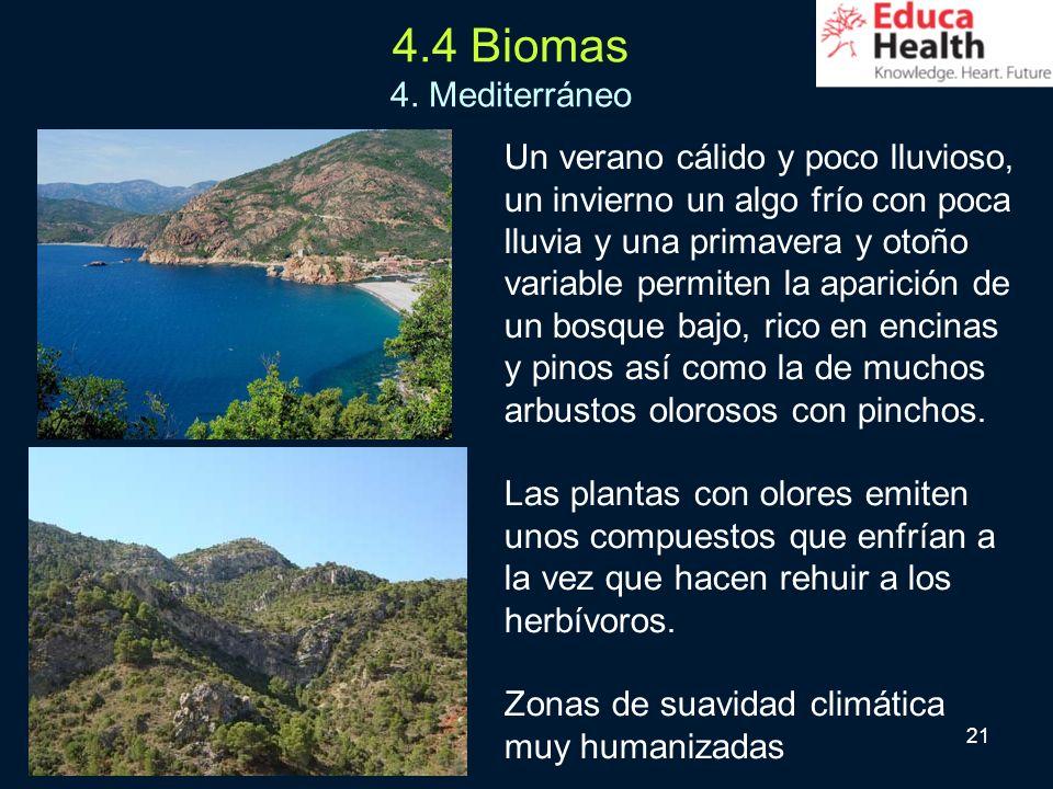 21 4.4 Biomas 4. Mediterráneo Un verano cálido y poco lluvioso, un invierno un algo frío con poca lluvia y una primavera y otoño variable permiten la