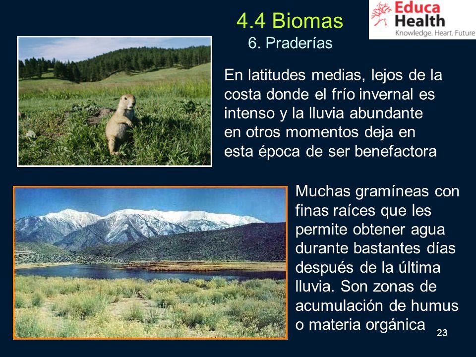 23 4.4 Biomas 6. Praderías En latitudes medias, lejos de la costa donde el frío invernal es intenso y la lluvia abundante en otros momentos deja en es