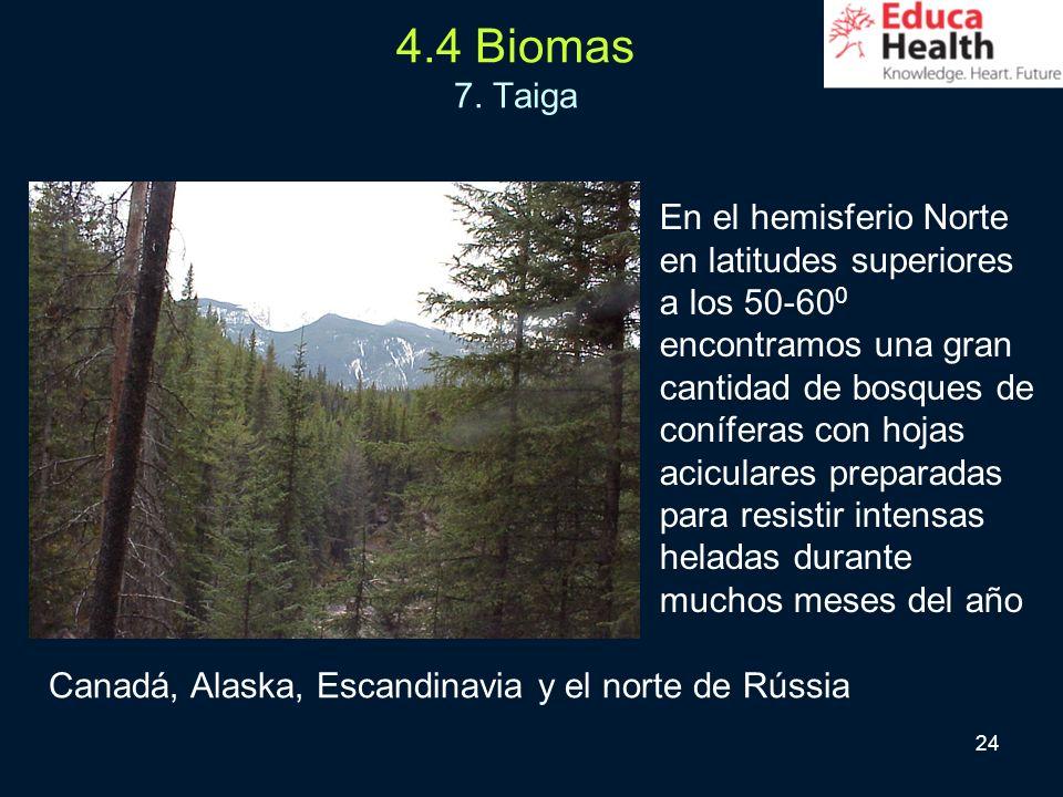 24 4.4 Biomas 7. Taiga En el hemisferio Norte en latitudes superiores a los 50-60 0 encontramos una gran cantidad de bosques de coníferas con hojas ac