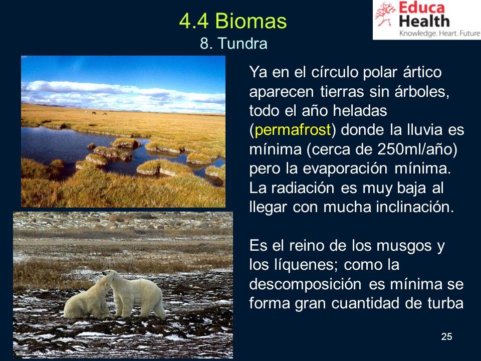 25 4.4 Biomas 8. Tundra Ya en el círculo polar ártico aparecen tierras sin árboles, todo el año heladas (permafrost) donde la lluvia es mínima (cerca