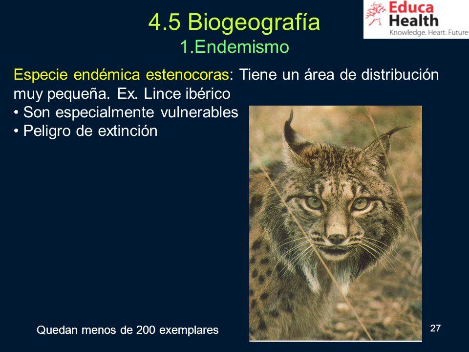 27 4.5 Biogeografía 1.Endemismo Especie endémica estenocoras: Tiene un área de distribución muy pequeña. Ex. Lince ibérico Son especialmente vulnerabl