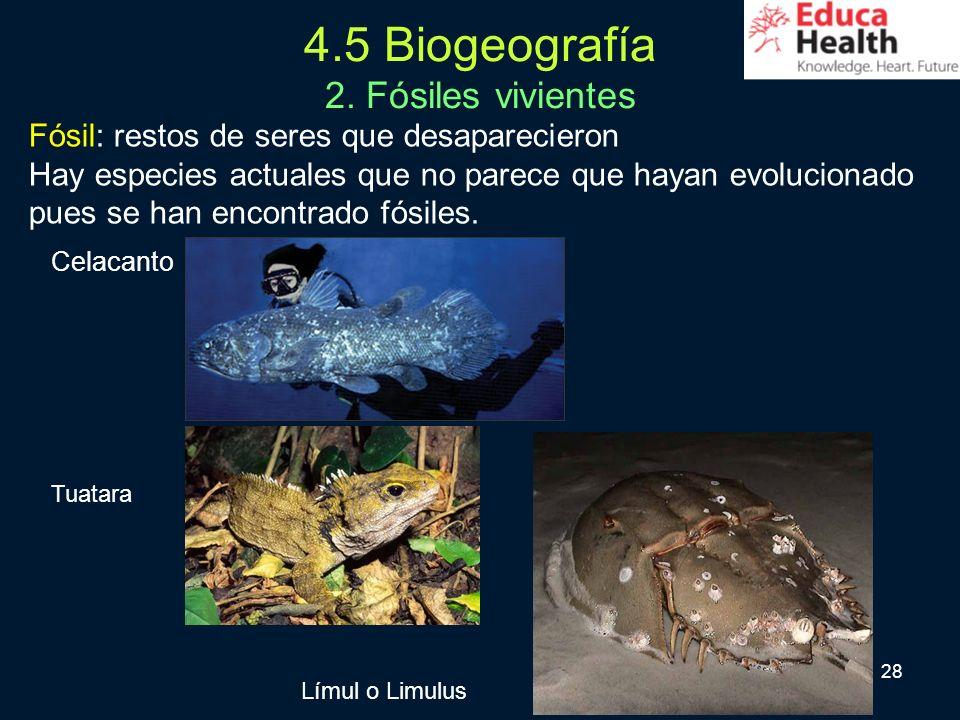 28 4.5 Biogeografía 2. Fósiles vivientes Fósil: restos de seres que desaparecieron Hay especies actuales que no parece que hayan evolucionado pues se