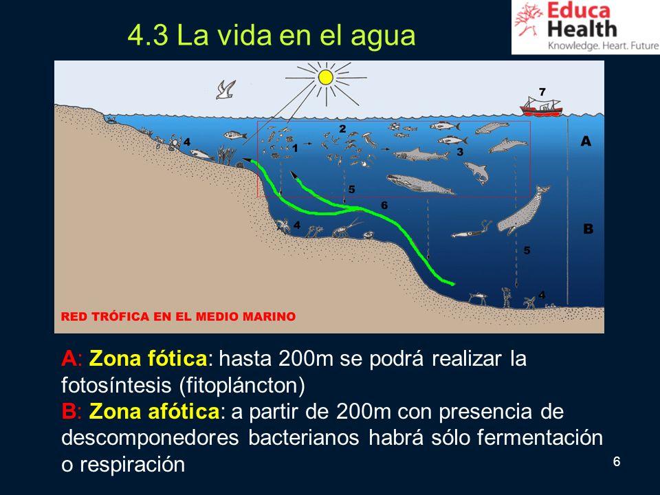 6 4.3 La vida en el agua A: Zona fótica: hasta 200m se podrá realizar la fotosíntesis (fitopláncton) B: Zona afótica: a partir de 200m con presencia d