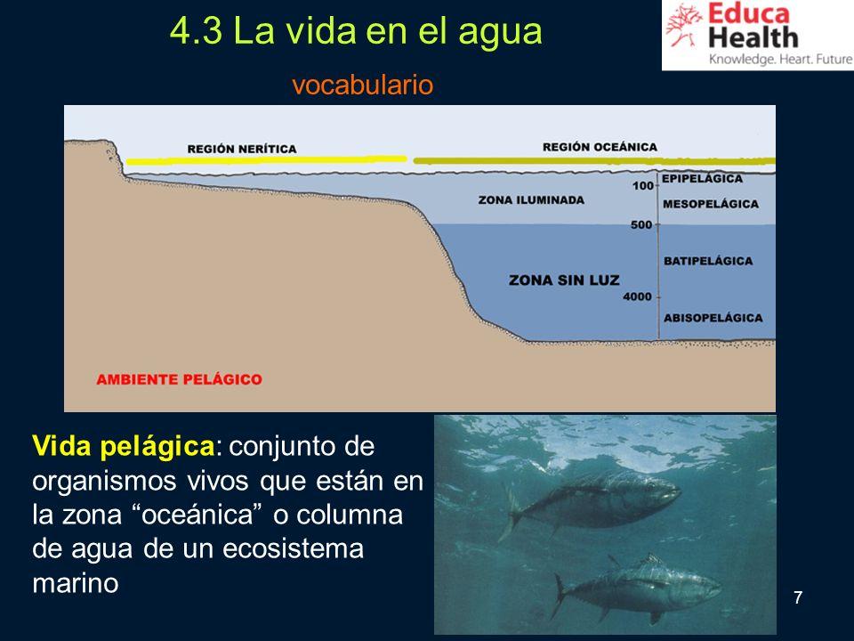 7 4.3 La vida en el agua vocabulario Vida pelágica: conjunto de organismos vivos que están en la zona oceánica o columna de agua de un ecosistema mari