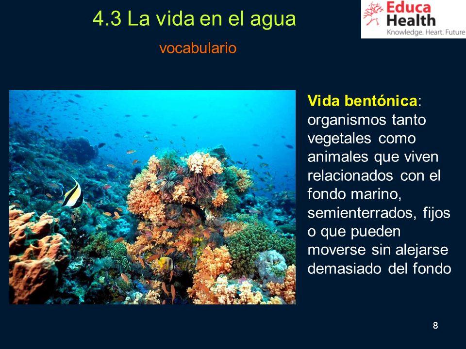 8 Vida bentónica: organismos tanto vegetales como animales que viven relacionados con el fondo marino, semienterrados, fijos o que pueden moverse sin