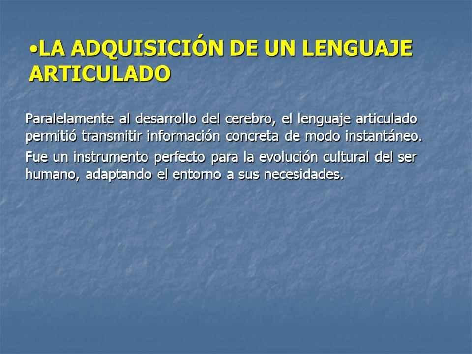 LA ADQUISICIÓN DE UN LENGUAJE ARTICULADOLA ADQUISICIÓN DE UN LENGUAJE ARTICULADO Paralelamente al desarrollo del cerebro, el lenguaje articulado permitió transmitir información concreta de modo instantáneo.