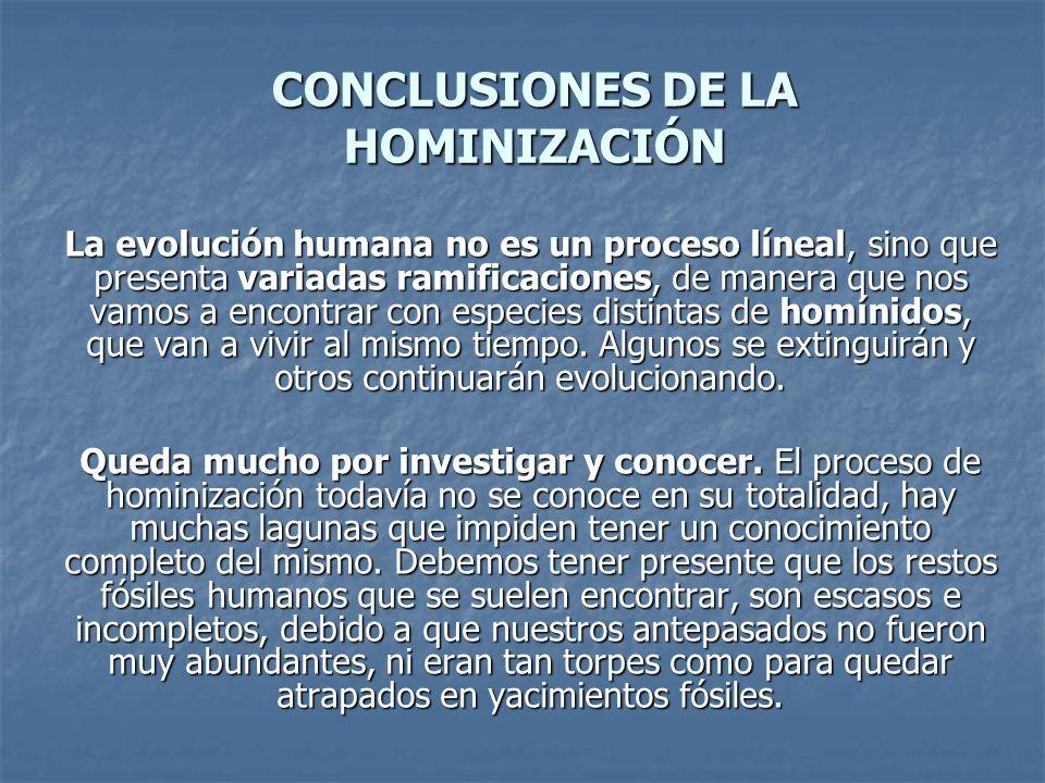 CONCLUSIONES DE LA HOMINIZACIÓN La evolución humana no es un proceso líneal, sino que presenta variadas ramificaciones, de manera que nos vamos a encontrar con especies distintas de homínidos, que van a vivir al mismo tiempo.