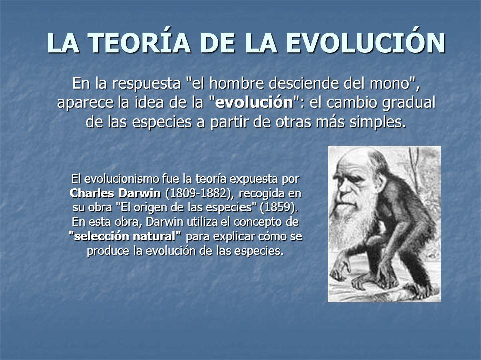 LA TEORÍA DE LA EVOLUCIÓN En la respuesta el hombre desciende del mono , aparece la idea de la evolución : el cambio gradual de las especies a partir de otras más simples.