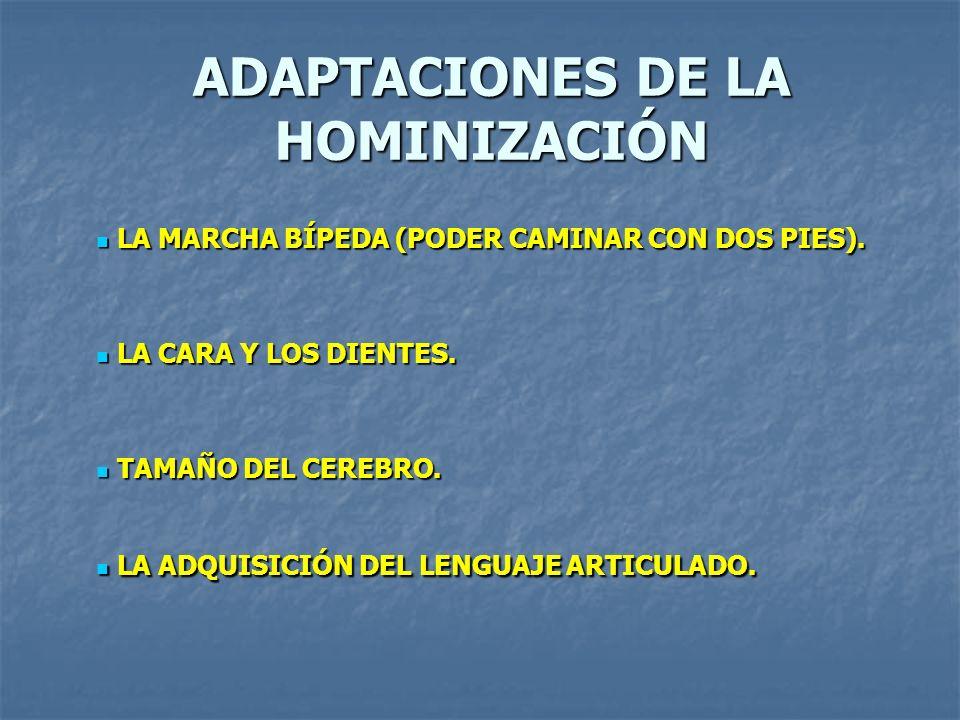 ADAPTACIONES DE LA HOMINIZACIÓN LA MARCHA BÍPEDA (PODER CAMINAR CON DOS PIES).