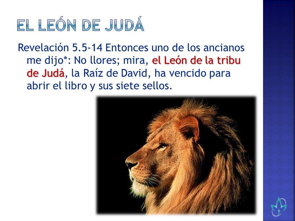 el León de la tribu de Judá Revelación 5.5-14 Entonces uno de los ancianos me dijo*: No llores; mira, el León de la tribu de Judá, la Raíz de David, h