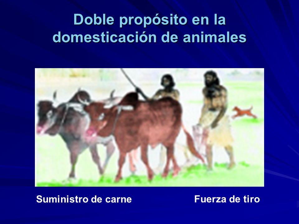 Doble propósito en la domesticación de animales Suministro de carne Fuerza de tiro