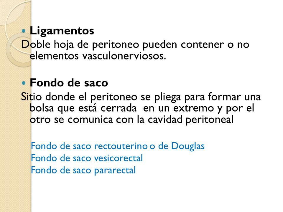 Ligamentos Doble hoja de peritoneo pueden contener o no elementos vasculonerviosos. Fondo de saco Sitio donde el peritoneo se pliega para formar una b