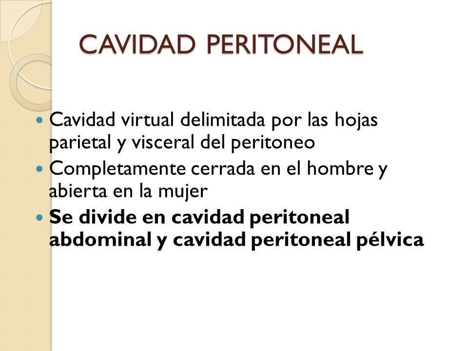 CAVIDAD PERITONEAL Cavidad virtual delimitada por las hojas parietal y visceral del peritoneo Completamente cerrada en el hombre y abierta en la mujer Se divide en cavidad peritoneal abdominal y cavidad peritoneal pélvica