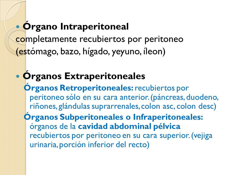 Órgano Intraperitoneal completamente recubiertos por peritoneo (estómago, bazo, hígado, yeyuno, íleon) Órganos Extraperitoneales Órganos Retroperitoneales: recubiertos por peritoneo sólo en su cara anterior.