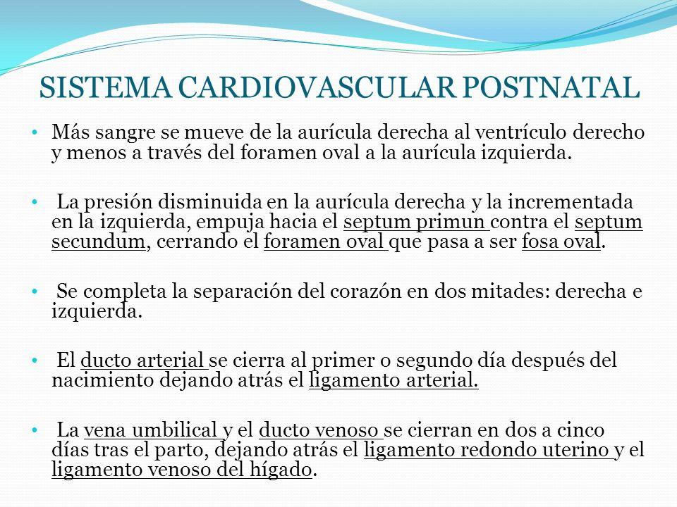 Más sangre se mueve de la aurícula derecha al ventrículo derecho y menos a través del foramen oval a la aurícula izquierda. La presión disminuida en l