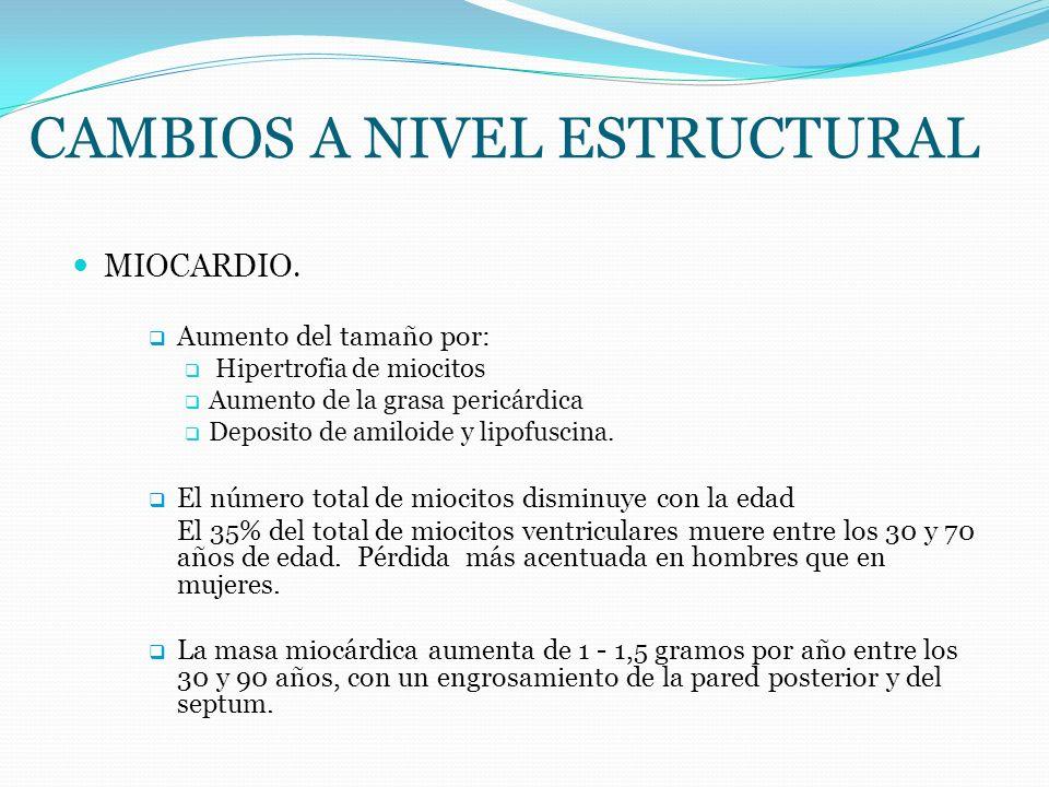 CAMBIOS A NIVEL ESTRUCTURAL MIOCARDIO. Aumento del tamaño por: Hipertrofia de miocitos Aumento de la grasa pericárdica Deposito de amiloide y lipofusc