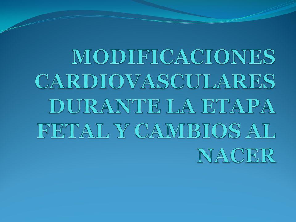 INTRODUCCIÓN SISTEMA CARDIOVASCULAR FETAL SISTEMA CARDIOVASCULAR POSTNATAL DIFERENCIAS ENTRE EL SISTEMA CARDIOVASCULAR FETAL Y EL SISTEMA CARDIOVASCULAR ADULTO
