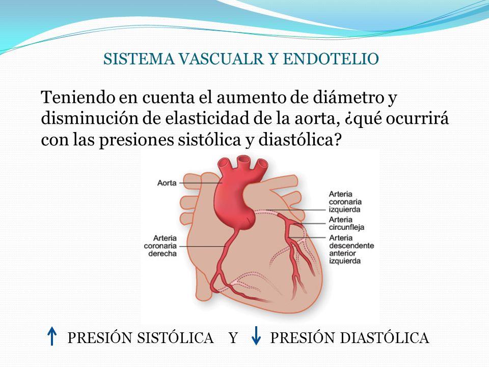 SISTEMA VASCUALR Y ENDOTELIO Teniendo en cuenta el aumento de diámetro y disminución de elasticidad de la aorta, ¿qué ocurrirá con las presiones sistó