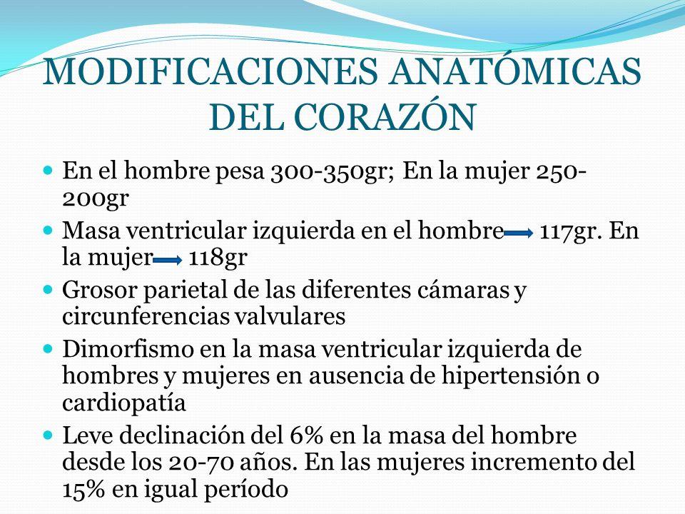 En el hombre pesa 300-350gr; En la mujer 250- 200gr Masa ventricular izquierda en el hombre 117gr. En la mujer 118gr Grosor parietal de las diferentes