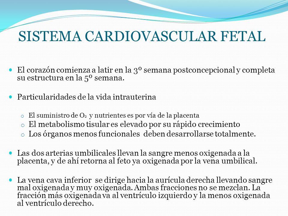 SISTEMA CARDIOVASCULAR FETAL La eyección de los ventrículos no es homogénea; Ventrículo izquierdo sangre oxigenada.