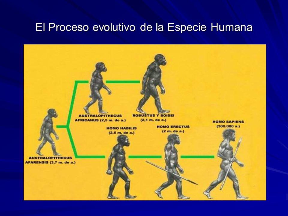 Los rasgos distintivos del Proceso de Homonización Entre los rasgos distintivos del proceso de Homonización destacan: El aumento de la capacidad craneana lo que posibilita un mayor desarrollo intelectual.