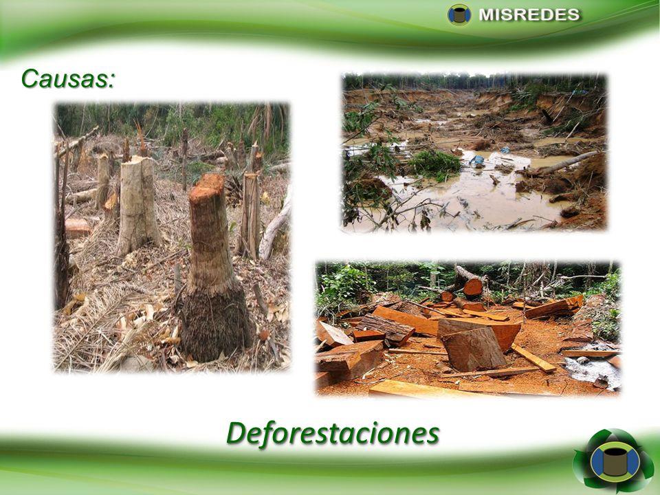 DeforestacionesDeforestaciones Causas: