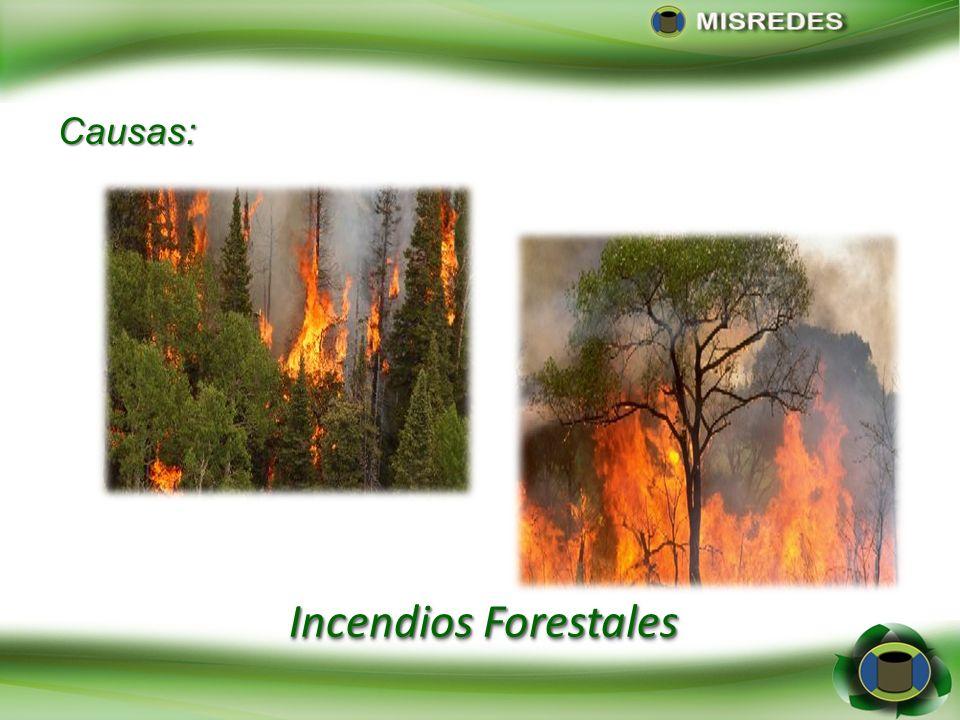 Incendios Forestales Causas: