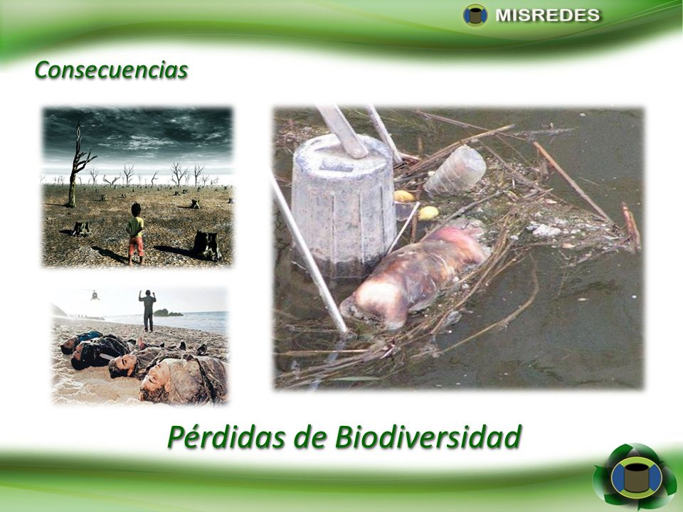 Pérdidas de Biodiversidad ConsecuenciasConsecuencias
