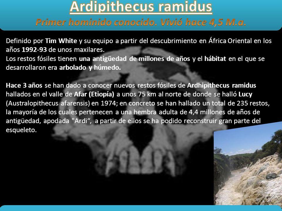 Definido por Tim White y su equipo a partir del descubrimiento en África Oriental en los años 1992-93 de unos maxilares. Los restos fósiles tienen una