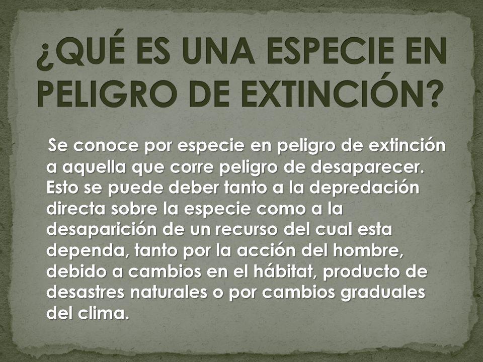Se conoce por especie en peligro de extinción a aquella que corre peligro de desaparecer. Esto se puede deber tanto a la depredación directa sobre la