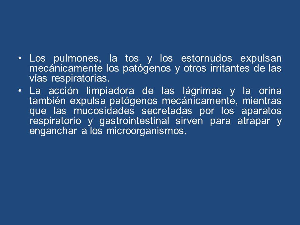 Los pulmones, la tos y los estornudos expulsan mecánicamente los patógenos y otros irritantes de las vías respiratorias. La acción limpiadora de las l