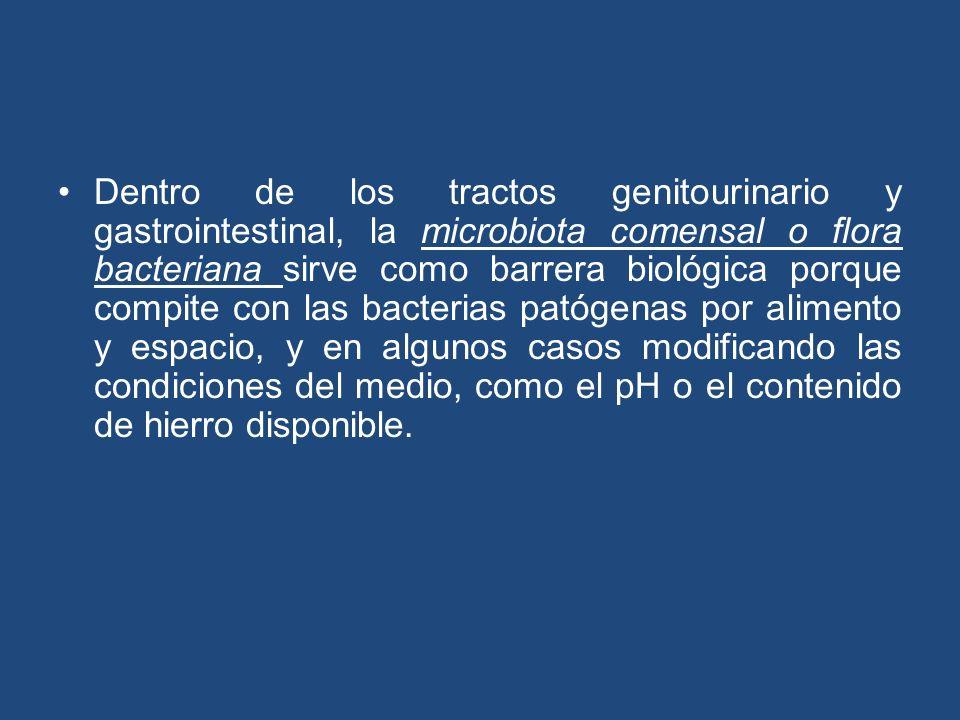 Dentro de los tractos genitourinario y gastrointestinal, la microbiota comensal o flora bacteriana sirve como barrera biológica porque compite con las