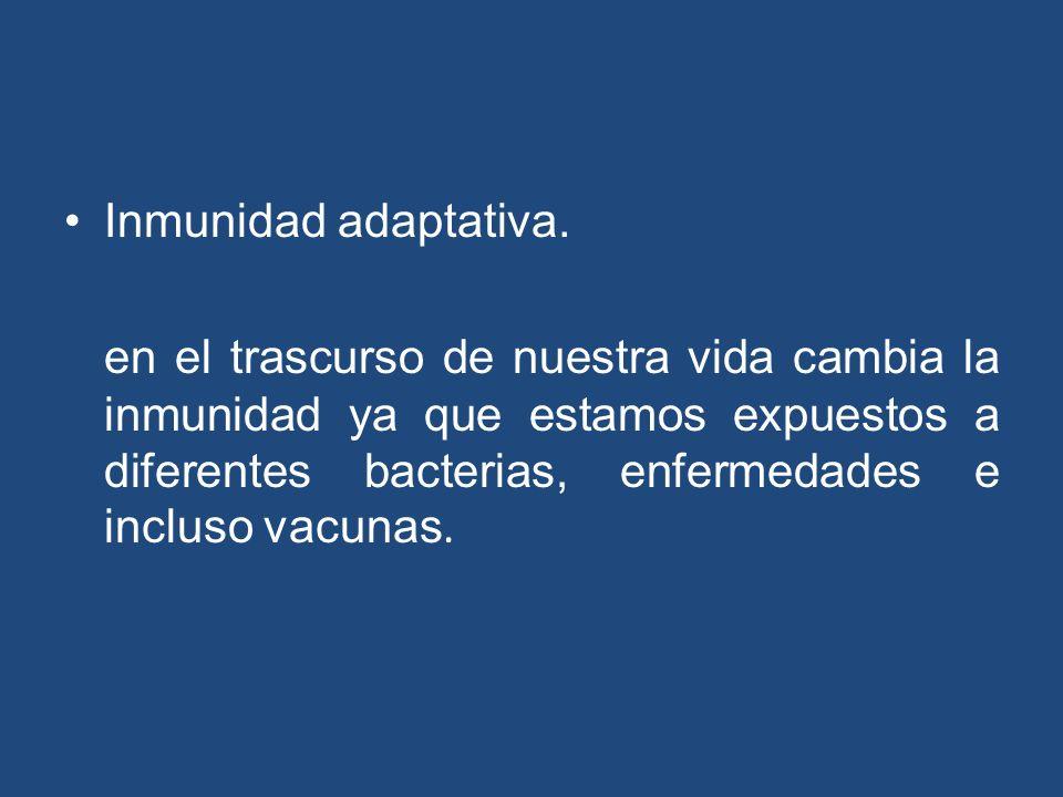 Inmunidad adaptativa. en el trascurso de nuestra vida cambia la inmunidad ya que estamos expuestos a diferentes bacterias, enfermedades e incluso vacu