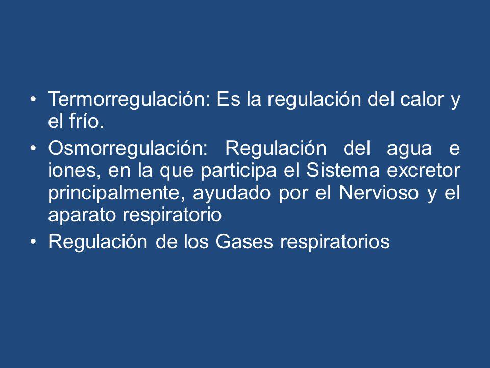 Termorregulación: Es la regulación del calor y el frío. Osmorregulación: Regulación del agua e iones, en la que participa el Sistema excretor principa