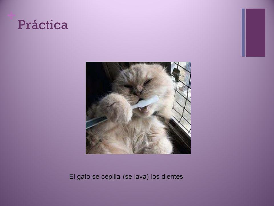 + Práctica El gato se cepilla (se lava) los dientes