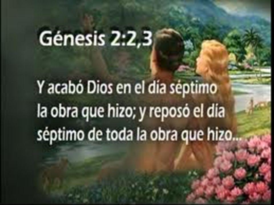 El Quinto dia: Dios dijo y fueron hechos los seres vivientes de los mares y los rios y todas las aves.