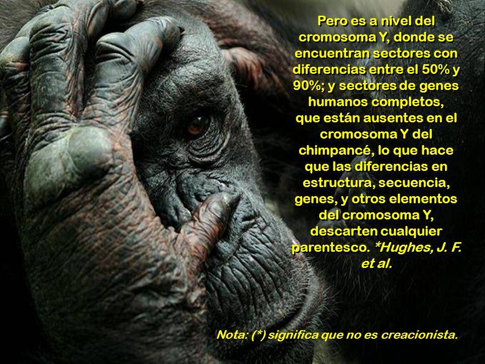 En vez del 5% inicial, ahora se considera que el 93% del ADN es activo y funcional, y en el humano, las diferencias absolutas con el chimpancé, se con