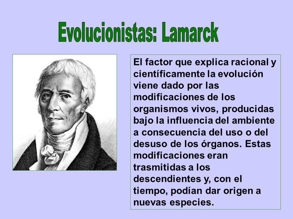 El factor que explica racional y científicamente la evolución viene dado por las modificaciones de los organismos vivos, producidas bajo la influencia