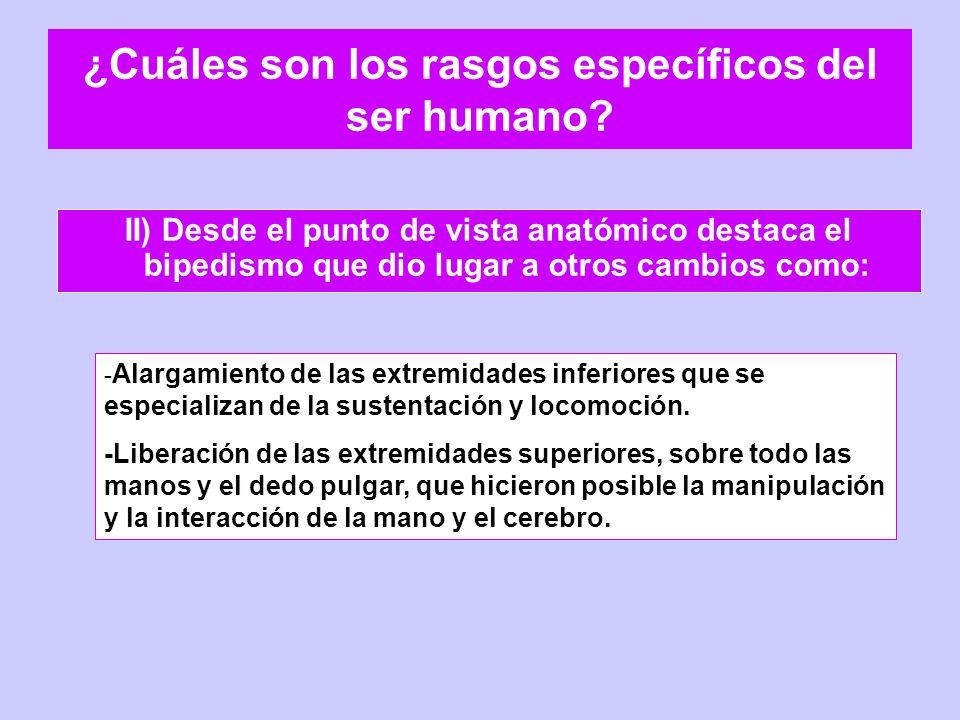 ¿Cuáles son los rasgos específicos del ser humano? II) Desde el punto de vista anatómico destaca el bipedismo que dio lugar a otros cambios como: - Al