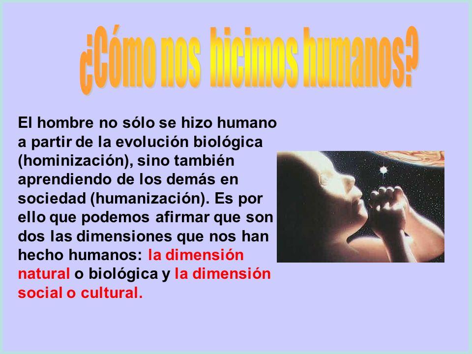 El hombre no sólo se hizo humano a partir de la evolución biológica (hominización), sino también aprendiendo de los demás en sociedad (humanización).