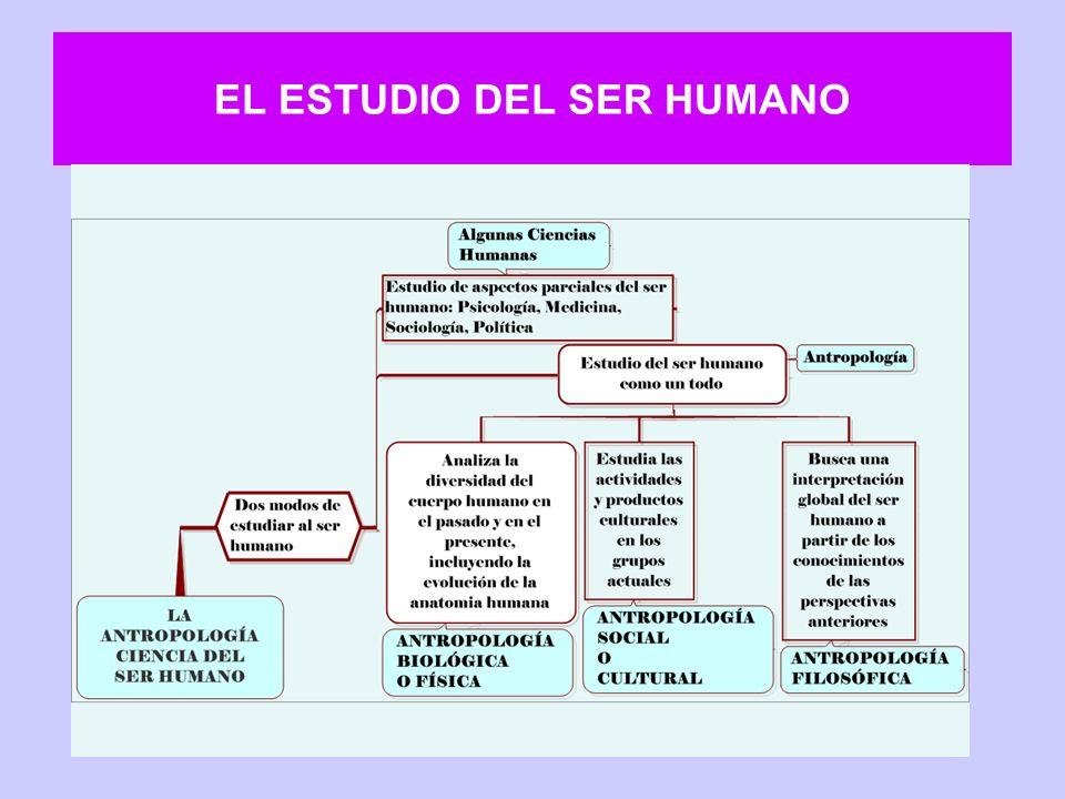 El estudio del hombre en la Antropología general Para la Antropología general el estudio del ser humano requiere analizarlo como un ser biocultural.