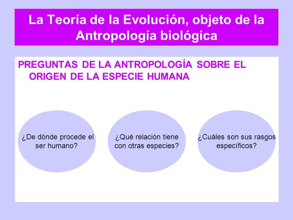 La Teoría de la Evolución, objeto de la Antropología biológica PREGUNTAS DE LA ANTROPOLOGÍA SOBRE EL ORIGEN DE LA ESPECIE HUMANA ¿De dónde procede el