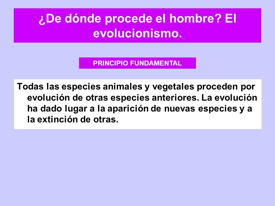 ¿De dónde procede el hombre? El evolucionismo. Todas las especies animales y vegetales proceden por evolución de otras especies anteriores. La evoluci