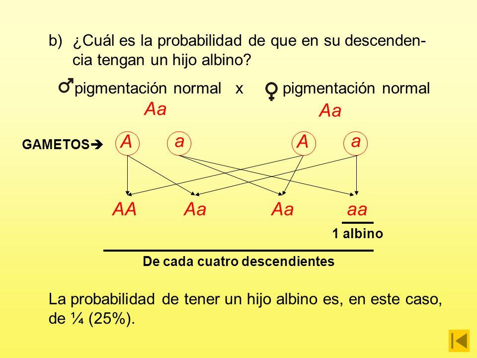 a)¿Cuáles pueden ser sus genotipos? Albino Al tener pigmentación normal, los padres deben tener también presente el alelo A y, por consiguiente, son h