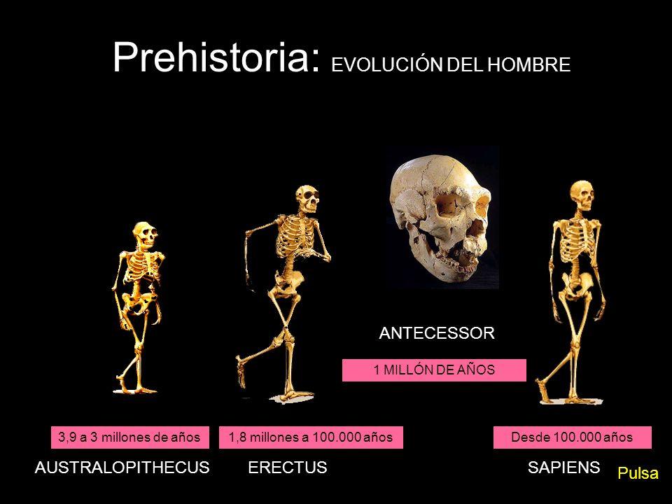 3,9 a 3 millones de años1,8 millones a 100.000 añosDesde 100.000 años AUSTRALOPITHECUSERECTUSSAPIENS Prehistoria: EVOLUCIÓN DEL HOMBRE ANTECESSOR 1 MI